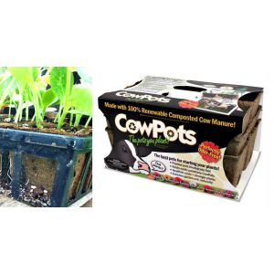 CowPots Six Cell Growing Flat