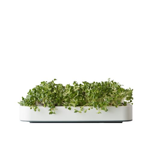 Chefn Microgreen Grower Kit